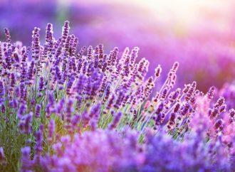 Dekoracje kwiatowe – praktycznie i z pomysłem